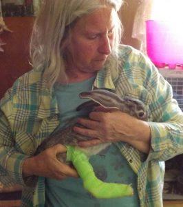 Inj Bunny